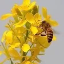 广西品牌蜂蜜 白天喝蜂蜜 黄酒里可以加蜂蜜吗 阿胶蜂蜜膏的做法 蒸雪梨蜂蜜