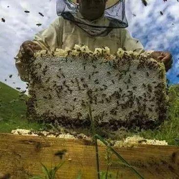 康师傅+蜂蜜酸枣 蜂蜜众筹问题 怎么样辨别蜂蜜真假 熊大熊二吃蜂蜜 早茶