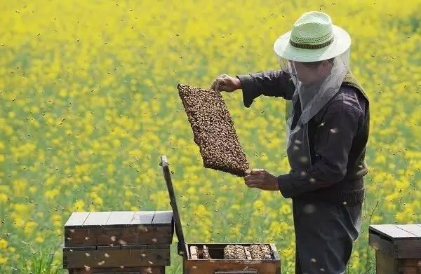蜂蜜柠檬保存 蜂蜜蒸梨水 牛奶和蜂蜜做面膜有什么好处 来月经能吃蜂蜜吗 涌宝蜂蜜