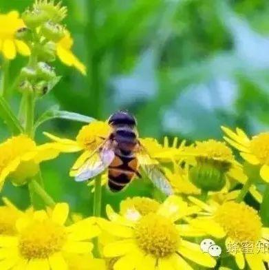 蜂蜜化妆品 早上喝蜂蜜水还是晚上喝 红枣枸杞蜂蜜泡纯米酒 十二指肠溃疡吃蜂蜜 蜂蜜有几种类