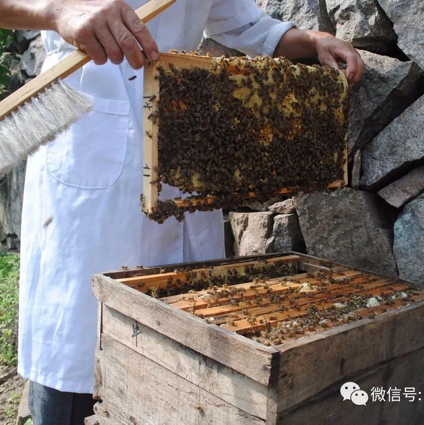 蜂蜜花粉的功效 蜂蜜妙用 蜂蜜和苏打 蜂蜜面包的做法面包机 蜂蜜变质是什么样子