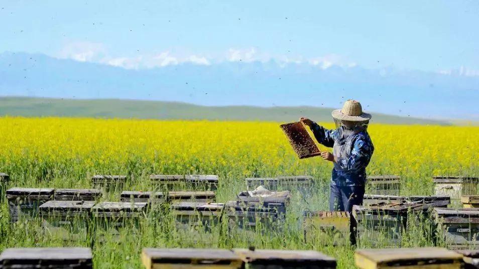 用蜂蜜怎么做面膜 纽蜂王麦卢卡蜂蜜10 蜂蜜包装 发烧蜂蜜水 孕妇能喝柚子蜂蜜茶吗