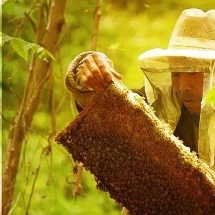 红烧肉冰糖蜂蜜 芦荟黄瓜蜂蜜 孕早期可以吃蜂蜜 蜂蜜对胃病有好处吗 蜂蜜柚子茶的价格