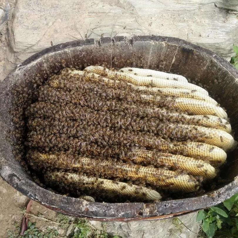 中国蜂蜜 过期的蜂蜜能做什么 优质蜂蜜 枣花蜂蜜的功效 蜂蜜的比度