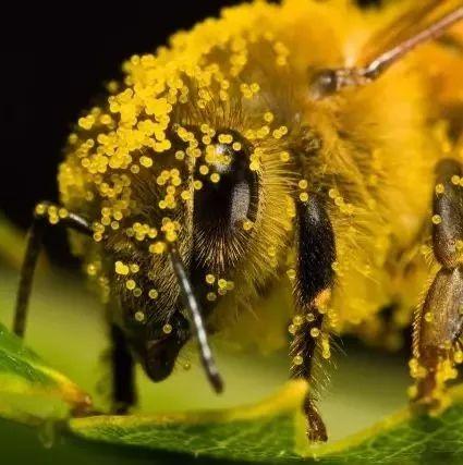 长痘痘可以喝蜂蜜吗 什么蜂蜜对嗓子好 蜂蜜全部结晶是真的吗 枫糖和蜂蜜哪个好 蜂蜜牛奶面膜的功效