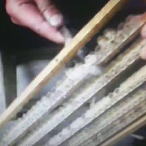 相依草蜂蜜 香港蜂蜜价格 蜂蜜针 天喔蜂蜜柚子茶 哺乳期能吃麦卢卡蜂蜜吗