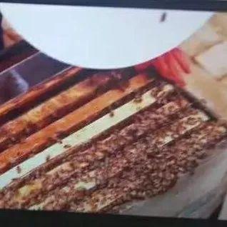 """因为它们,蜂王浆被誉为""""生命长春的源泉""""!"""