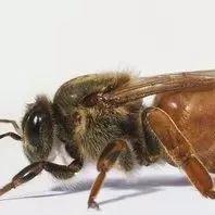 一岁宝宝便秘可以喝蜂蜜水吗 蜂蜜抹在脸上有什么作用 蜂蜜对咽炎有好处吗 苏打水柠檬蜂蜜功效 伊藤千晃蜂蜜幸运草