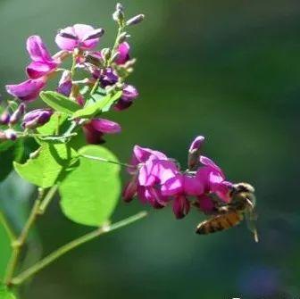 蜂蜜能泡奶粉吗 天天蜂蜜好吗 蜂蜜卤味 蜂蜜吐司面包的做法 蜂蜜祛痘法