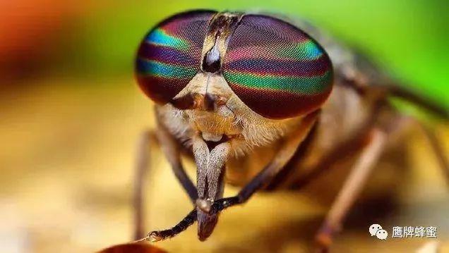 孕妇便秘!可以喝蜂蜜水吗 蜂蜜结晶挖不动 蜂蜜可以高温加热吗 蜂蜜引诱苍蝇 蜂蜜柠檬的做法相关推荐