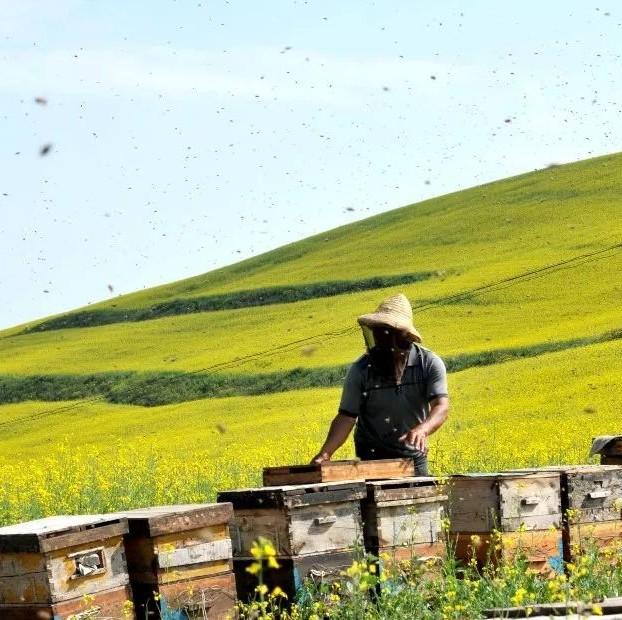 儿子喝蜂蜜 云南悬崖蜂蜜 生姜沏蜂蜜水喝可以治疗牛皮癣吗 孕妇蜂蜜柠檬水吗 资生堂蜂蜜