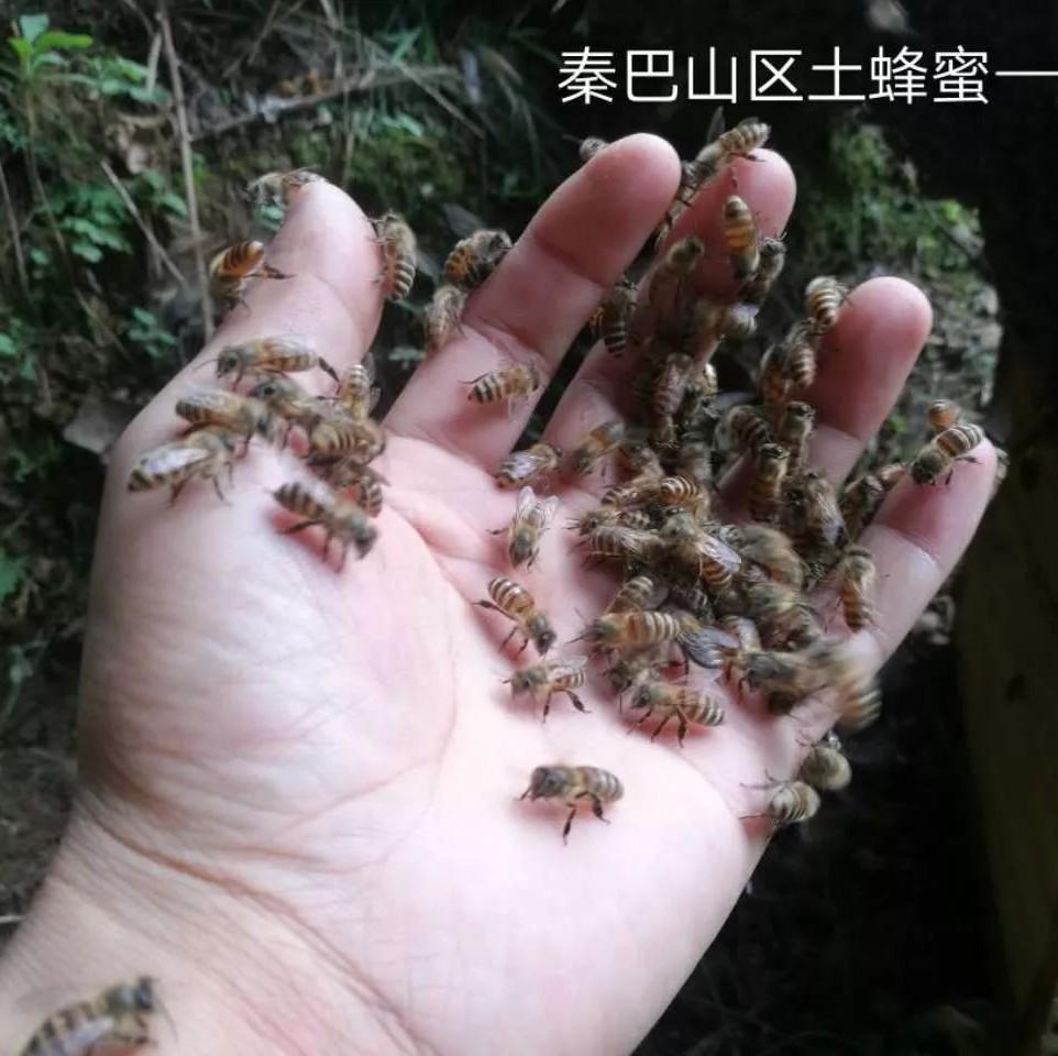 蜂蜜治痤疮 真的蜂蜜有透时小泡吗 澳洲蜂蜜进口报关 如何用蜂蜜美容 老山蜂蜜怎么样