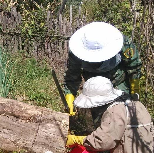 喂白糖的蜂蜜 怎么蒸香蕉蜂蜜 蜂蜜摇晃 蜂蜜可以天天喝 6岁儿童喝蜂蜜水好吗