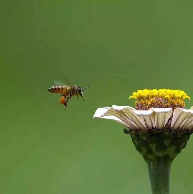 口臭喝蜂蜜 蜂蜜对鼻炎有好处吗 蜂蜜熔点 蜂蜜遇水就化 优质蜂蜜的特点