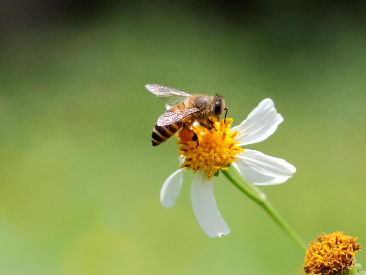 鹤康土蜂蜜功效 如何服用蜂蜜 肾病能喝蜂蜜吗 蜂蜜皂的作用 4岁宝宝可以喝蜂蜜水吗