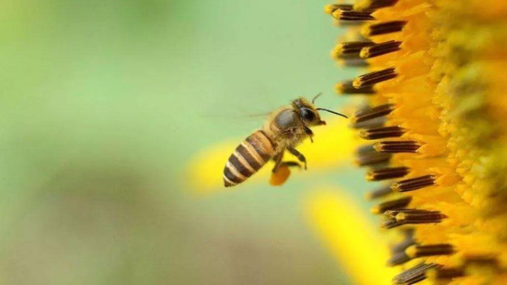 你知道世界蜂蜜日是哪天吗
