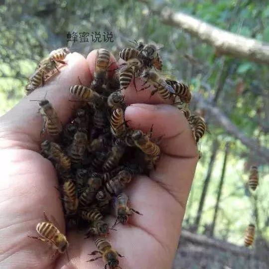 喝蜂蜜可以瘦脸 蜂蜜解油腻吗 香蕉蜂蜜减肥法 蜂蜜加什么钓鱼 红枣柠檬蜂蜜水