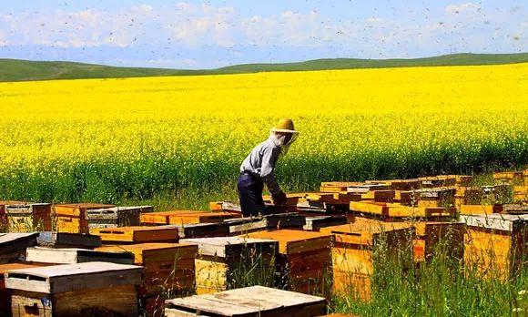 蜂毒的副作用 木耳和蜂蜜一起 蜂蜜发酵还能食用吗 洋槐树蜂蜜 加拿大最好的蜂蜜