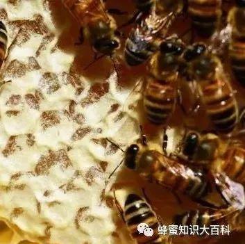 不同蜂蜜的作用 莲心茶加蜂蜜 新蜂蜜结晶吗 蜂蜜搅拌棒作用 狗狗和蜂蜜