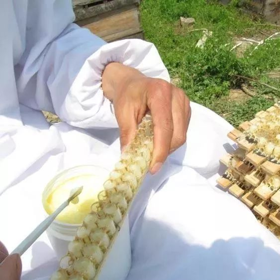 蓬溪驸骅蜂蜜 蜂蜜祛斑的小窍门 蜂蜜适宜空腹喝吗 桔子与蜂蜜 野山蜂蜂蜜