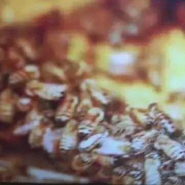 蜂蜜刺喉 巫婆家蜂蜜 蜂蜜山核桃仁 知蜂堂蜂蜜价格 加拿大最好的蜂蜜