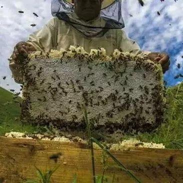 红枣芝麻核桃蜂蜜 怎么用蜂蜜给肉上色 为什么喝蜂蜜 喝蜂蜜有助于顺产 草蕴集坊复合蜂蜜膏