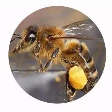 牛奶加蜂蜜有什么好处 柠檬腌蜂蜜比例 吉林市汪氏蜂蜜专卖店 麦卢卡蜂蜜面膜代理商名录 欧舒丹手工皂薰衣草蜂蜜牛奶