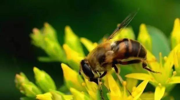 千红蜂蜜怎么样 平盖灵芝枸杞蜂蜜 牛奶和蜂蜜做面膜有什么好处 manuka蜂蜜品牌 豆瓣蜂蜜
