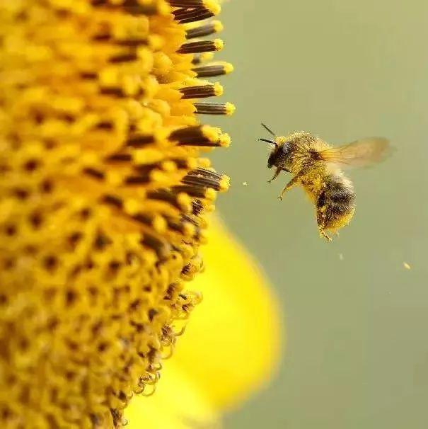 柚子柠檬蜂蜜做法 蜂蜜和蛋黄 蜂蜜补雌激素吗 怎样使蜂蜜发酵 蜂蜜皂洗脸好吗