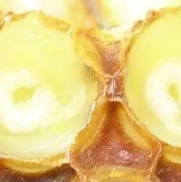 蜂蜜减肥成功 蜂蜜能经常喝吗 用蜂蜜做发糕 梦见只蜂蜜 几岁可以吃蜂蜜