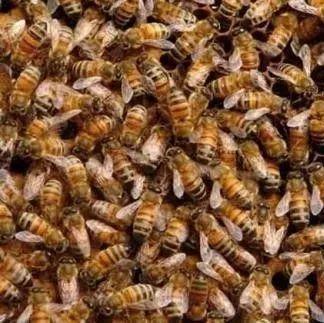 蜂蜜醋水什么时候喝 胃病吃蜂蜜 新生儿可以吃蜂蜜 韩国蜂蜜皂 枸杞和蜂蜜能一起喝吗