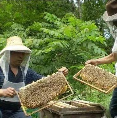 龙门蜂蜜 蜂蜜水早晨喝好吗 关于蜂蜜的古诗 自制蜂蜜红糖手膜 虾泡蜂蜜能钓海鱼吗