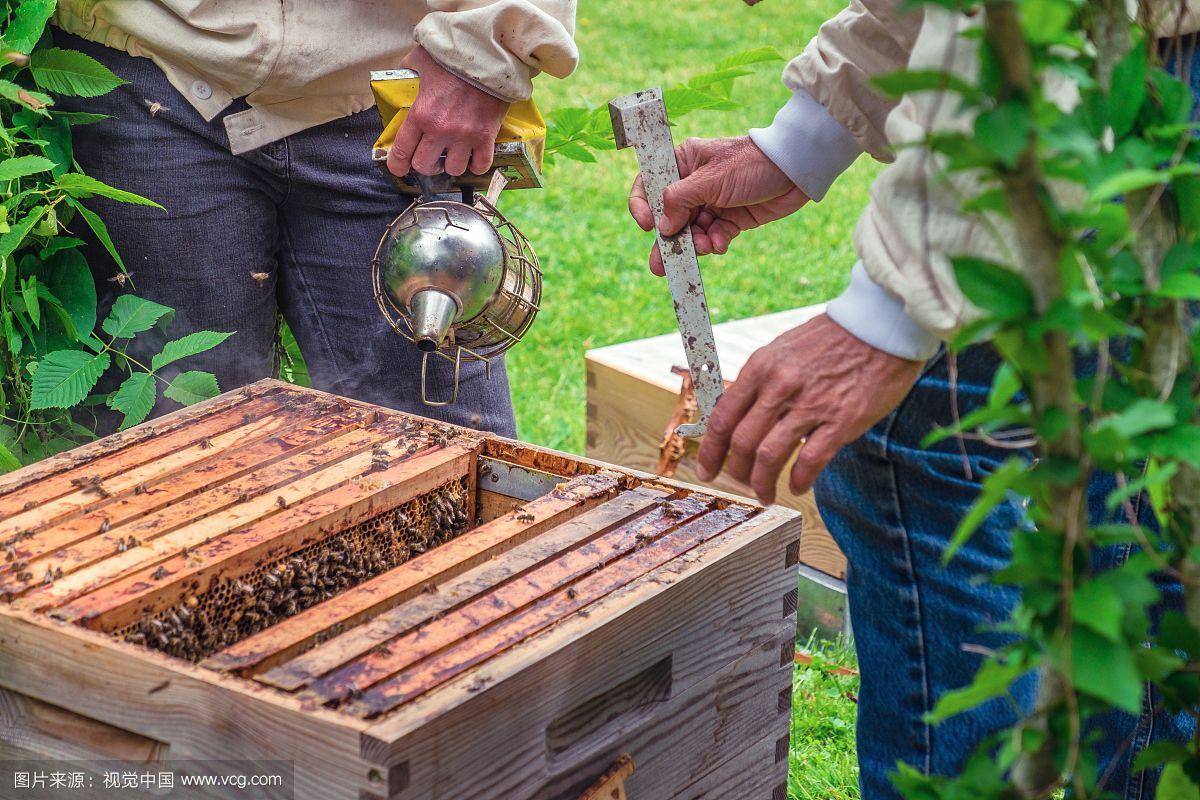 蜂蜜治脱发吗 山楂枸杞蜂蜜 蜂蜜加工生产线 谁用过红糖加蜂蜜面膜 槐花蜂蜜好吗