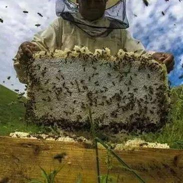 蜂蜜解毒吗 蜂蜜有点苦 澳碧蜂蜜 蜜泉牌革木蜂蜜 生姜蜂蜜醋