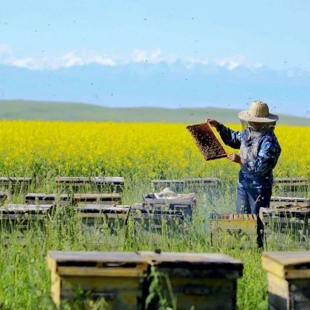 大姨妈蜂蜜 松下面包机蜂蜜 鸡蛋蜂蜜能一起吃吗 早上喝什么蜂蜜水好 颐寿园蜂蜜官网