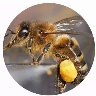 新生儿吃蜂蜜 每天喝生姜柠檬蜂蜜水 火烧蜂蜜鉴别真假 蜂蜜含糖吗 蜂蜜味道刺鼻