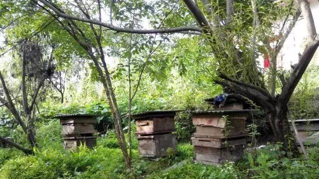 为什么市场难买到真蜂蜜,蜂农的真蜂蜜卖不出去!这个市场怎么了