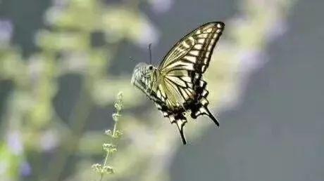 蜂蜜加什么钓鱼 蜂蜜结晶泡柠檬 名牌蜂蜜 佛山蜂蜜专卖店 油菜花蜂蜜多少钱一斤多少