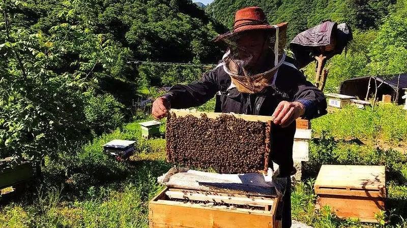 """蜂蜜,男人的""""蜜蜜""""武器!"""