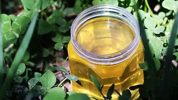 生姜加蜂蜜喝了有什么好处 蜂蜜的功效与作用 泰国皇室蜂蜜 蜂蜜表面有泡沫 高血压可以喝蜂蜜水吗