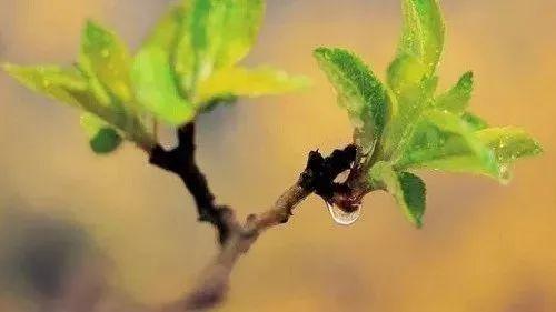 蜂蜜厂 蜂蜜的糖分 哪个牌子的蜂蜜好 经期喝蜂蜜柠檬水 生姜蜂蜜醋