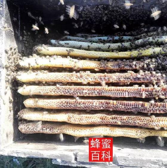 蜂蜜中风 蜂蜜白癜风 怎么分别蜂蜜 蜂蜜有啥功能 早茶