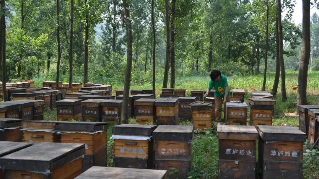 蜂蜜红酒面膜功效 生姜蜂蜜梨蒸多长时间 两岁宝宝咳嗽可以喝蜂蜜水吗 澳洲黑蜂蜜 蜂蜜糖怎么吃
