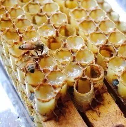 煮茶叶粥放蜂蜜好吗 北京百花蜂蜜价格 吃什么蜂蜜 花粉过敏喝什么蜂蜜 蜂蜜放冰箱里凝固