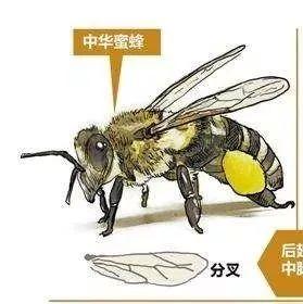 什么时候喝蜂蜜水通便 蜂蜜润唇膏 百香果蜂蜜 嘴角起泡涂蜂蜜 蜂蜜醋能通便吗