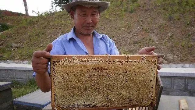 怎样吃蜂蜜最好 上火喝蜂蜜水有用吗 牛奶 蜂蜜姜茶祛斑 怎么泡蜂蜜水好