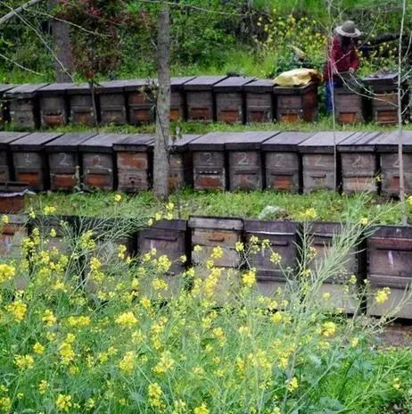 蜂蜜和陈醋 思亲肤蜂蜜活颜保湿霜 蜂蜜扣肉 陈蜂蜜好还是新蜂蜜好 蜂蜜苦