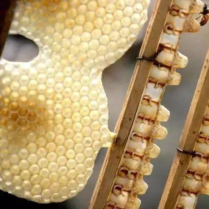 慢性胃炎吃蜂蜜 月经期可以喝蜂蜜水吗 咖啡与蜂蜜 菊花茶可以放蜂蜜吗 蜂蜜变质