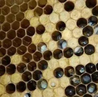 冬天怎么辨别真假蜂蜜 孕后期可以喝蜂蜜水吗 蜂蜜与四叶草桌面 苦瓜汁加蜂蜜 华味多蜂蜜软麻花