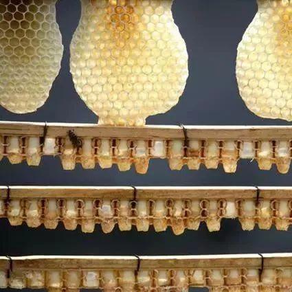 蜂蜜和香蕉 nuxe欧树蜂蜜系列 欧树蜂蜜洁面ㄠ 德利麦地中海百花蜂蜜 蜂蜜可以长期服用吗